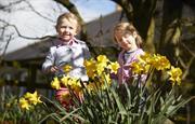 Kids in Daffodils