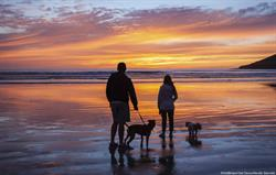 Dog sunset beach