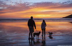 Dog sunset beach