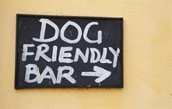Dog Friendly Bar