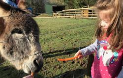 Feeding the Donkeys