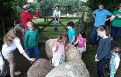 Fun with the sheep