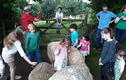 Interacting with the sheep