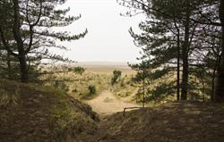 Pinewoods at Holkham