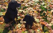 Autumn here is perfect for dogs